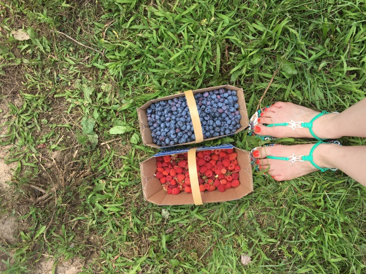 Blueberry and Raspberry Baskets